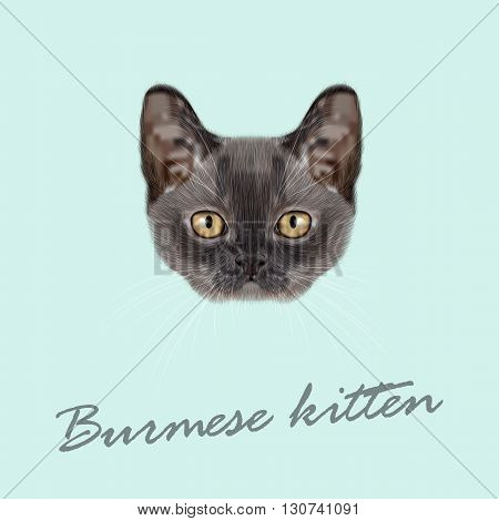 Vector Illustrated Portrait of Burmese kitten. Cute blue face of domestic cat on blue background.