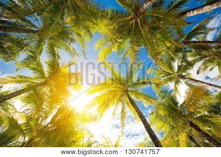 Palm trees against sunny blue sky