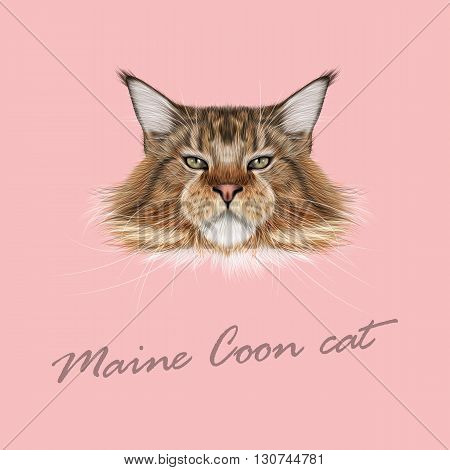 Vector Illustrated Portrait of Maine Coon cat. Cute fluffy face of domestic cat on pink background.