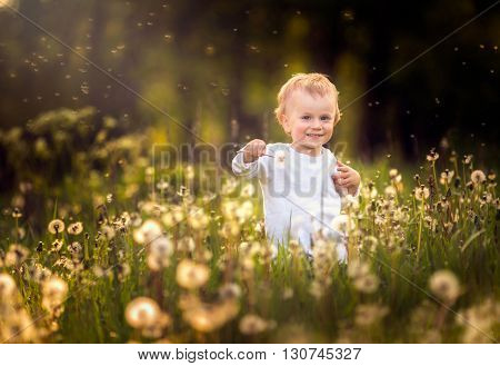 Happy Small Caucasian Child Blowing Dandelion Seeds