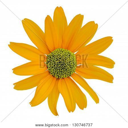 Flower white isolated background with clipping path. no shadows. Closeup with no shadows. Nature. Orange yellow.