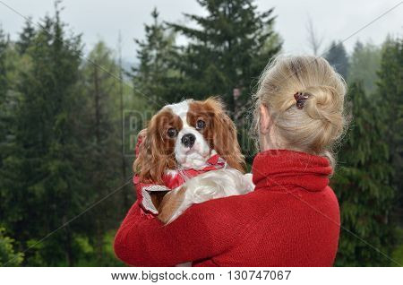 Cavalier King Charles Spaniel In Woman's Arms
