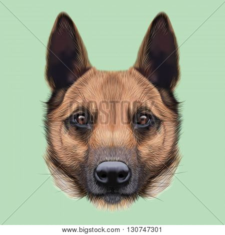 Illustrated Portrait of Malinois dog. Cute face of Shepherd dog on green background.