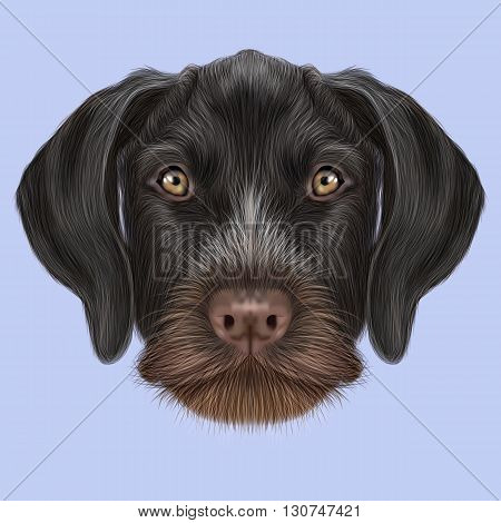 Illustrated Portrait of German Wirehaired Pointer dog. Cute brown face of hunting dog on blue background.