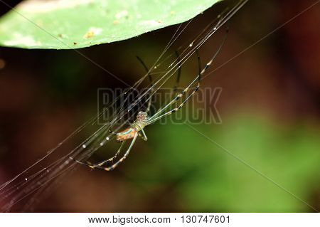 Macro photography showing a spider in close up