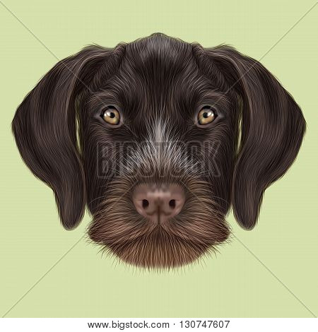 Illustrated Portrait of German Wirehaired Pointer dog. Cute red face of hunting dog on yellow background.