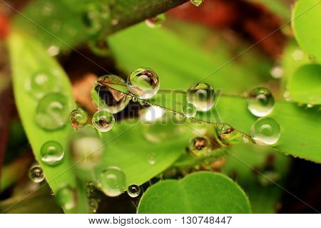 Macro photography showing a water droplets for background