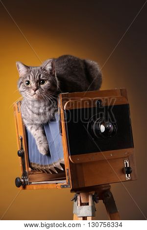 Beautiful gray cat sitting on the old camera dangling paw