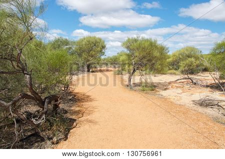 Path through the native green flora in the sandy landscape of Kalbarri National Park under a blue sky with clouds in Western Australia.