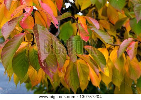 Autumn leaves texture. Yellow red and green fall foliage. Nature background wallpaper. Selective focus and shallow DOF