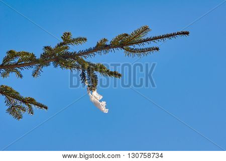 Snowon spruce in winter in Beskidy Mountains in Poland