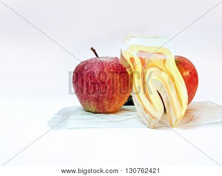 Two Apples and an artficial tooth.Apple good for dental health.An apple a day keep the doctor away.
