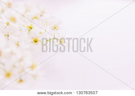 Sprigs of pink bird-cherry on the water with copy space. Border frame. Floral background. Spring wedding background. Macro.