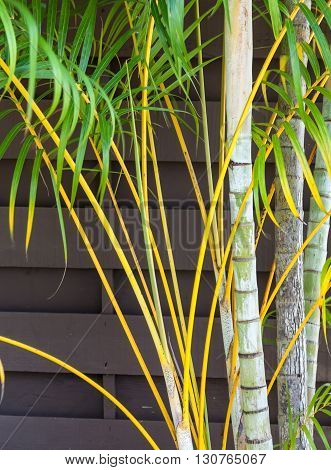 Palm fronds by the cost in South West Florida