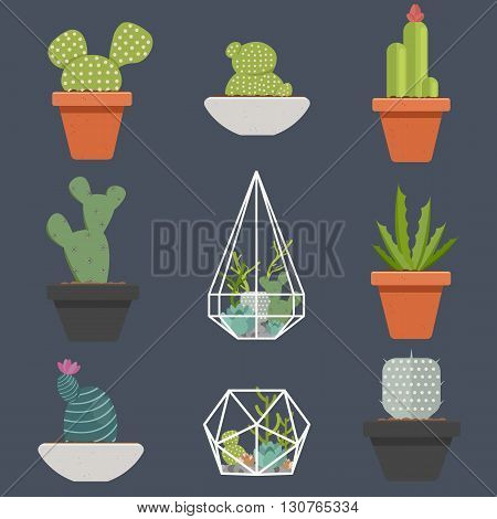 Set of succulent plants and cactuses in pots and glass terrariums. Cartoon Cactus. Flat botanical vector icons.Vector illustration.