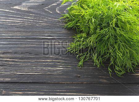 Bunch Of Fresh Organic Dill