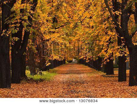 Foto de un callejón de otoño en el campo.