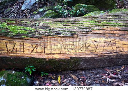 Marriage proposal carved into a moss covered fallen tree in rainforest