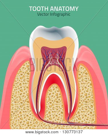 Human tooth dental infographic. Editable vector illustration. Medical image in green, pink and beige colors on a light green background useful for poster, leaflet or brochure graphic design.