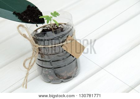 Soil addition to a new plant for good growth