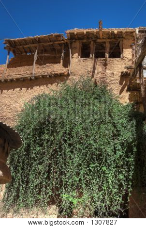 Burning Bush In Monastery Of St. Catherine, Sinai, Egypt