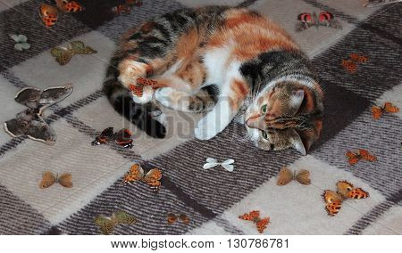 Fluffy tricolor cat lies on the bed and plays with the butterflies