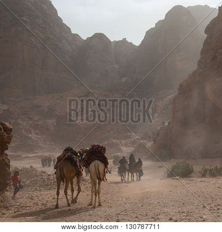 Camels walking in a sand storm in a steep canyon in Jordan