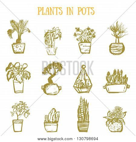 A set of colorful pots of flowers in grunge hand drawn style. Cactuses, lemon tree, calla lily, bamboo in pots. Vector illustration.