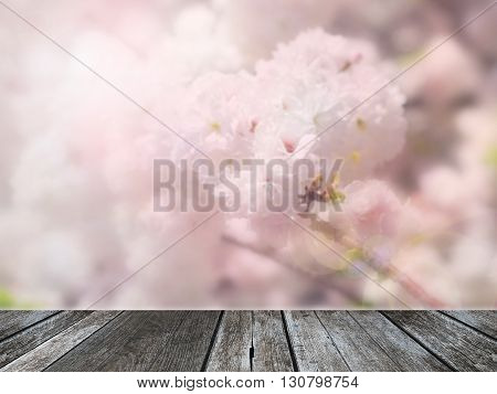 Abstract blur Pink cherry blossom (sakura) background with wood plank