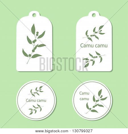 Camu camu leaves and berries vector illustration isolated. Superfood Camu camu green silhouette. Tags and Labels