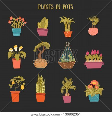 A set of colorful pots of flowers in cartoon style. Cactuses, lemon tree, calla lily, bamboo in pots on dark background. Vector illustration.