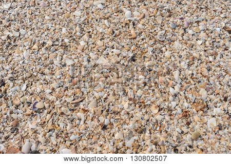 Background or backdrop of seashells accumulated on the beach