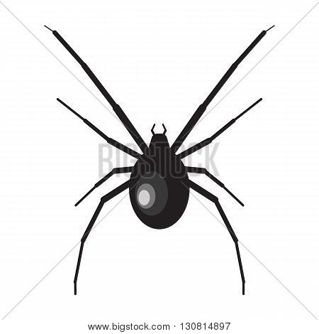 Black widow spider illustration. Spider on white background. Black widow vector. Spider illustration. Black widow spider isolated vector
