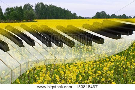 magical Golden field in the background of piano keys. green forest in the distance.