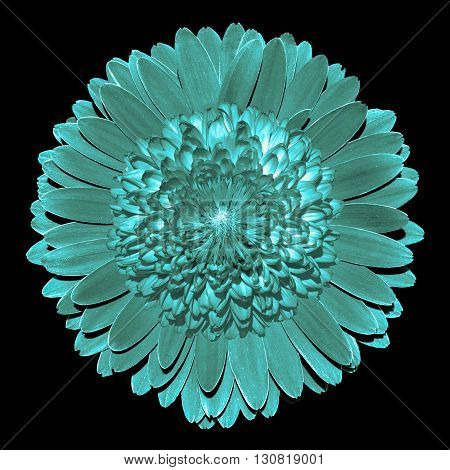 Surrealistic fantasy turquoise flower macro isolated on black