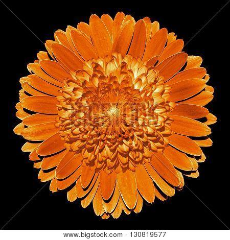 Surrealistic Fantasy Orange Flower Macro Isolated On Black