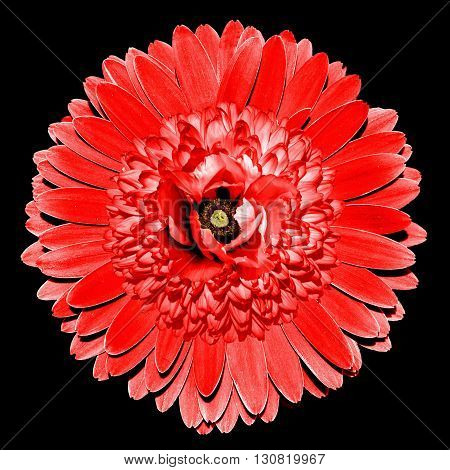 Surrealistic Fantasy Red Flower Macro Isolated On Black