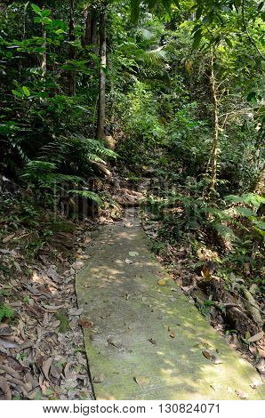 The path to the waterfall in the forest near the beach Mukut, Tioman Island, Malaysia