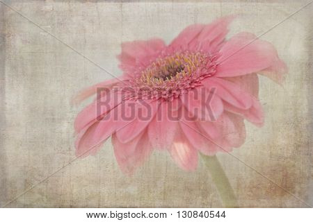 Pretty single pink flower that has been aged and distressed.