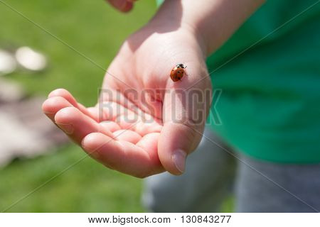 ladybug on a palm of the child, With a love of nature, care of insects