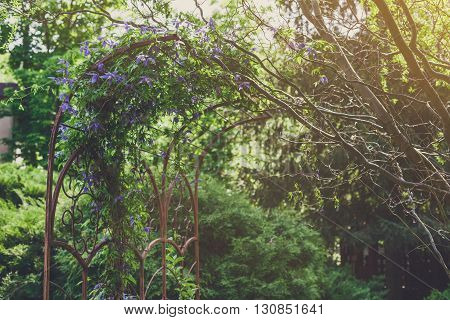 Beautiful landscape design, evergreen trees and flowers in sunlight. Modern landscaping: Fir trees, spruces, arborvitae, and metal arch with clematis vine. Summer garden or park design.