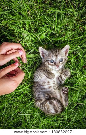 relax kitten on green grass. kitten walking on the grass in park