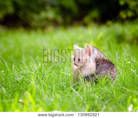 two adorable kittens in the green grass