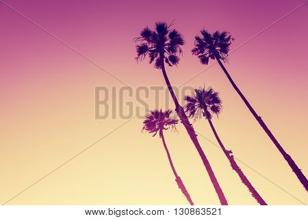 California Palm Trees view in Sunset Cliffs San Diego USA
