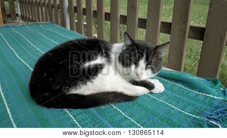 Cat sleeping on a bench in patio outdoors outside the house. Pet animal behavior concept.