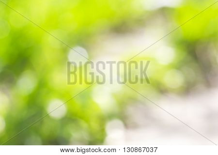 Summer background of blurred green grass with patches of sunlight