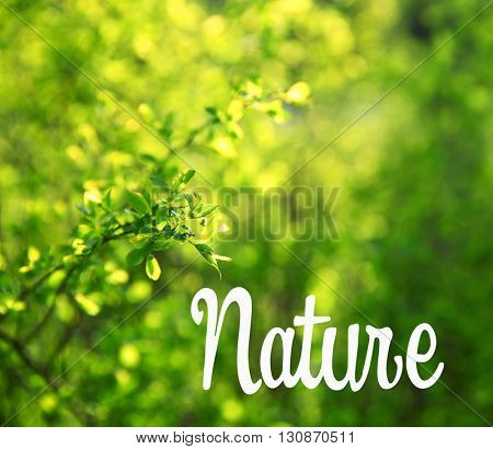 Green branches of tree on blurred background