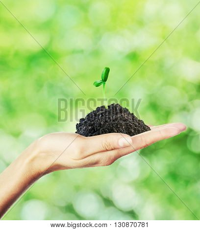 Hand holding green sprout on nature background. New life concept