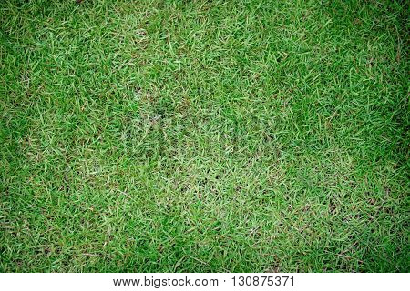 Green grass in the park of background.
