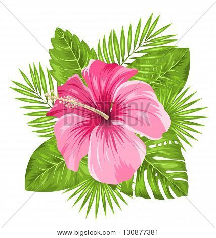 Illustration Beautiful Pink Hibiscus Flowers Blossom and Tropical Leaves, Isolated on White Background - Vector